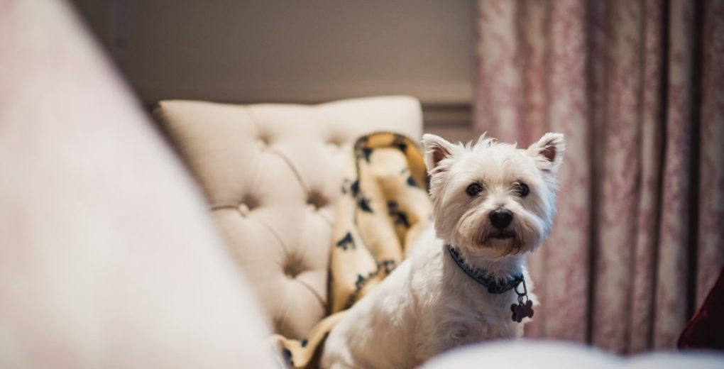 Holdsworth House hotel in West Yorkshire is a dog friendly hotel