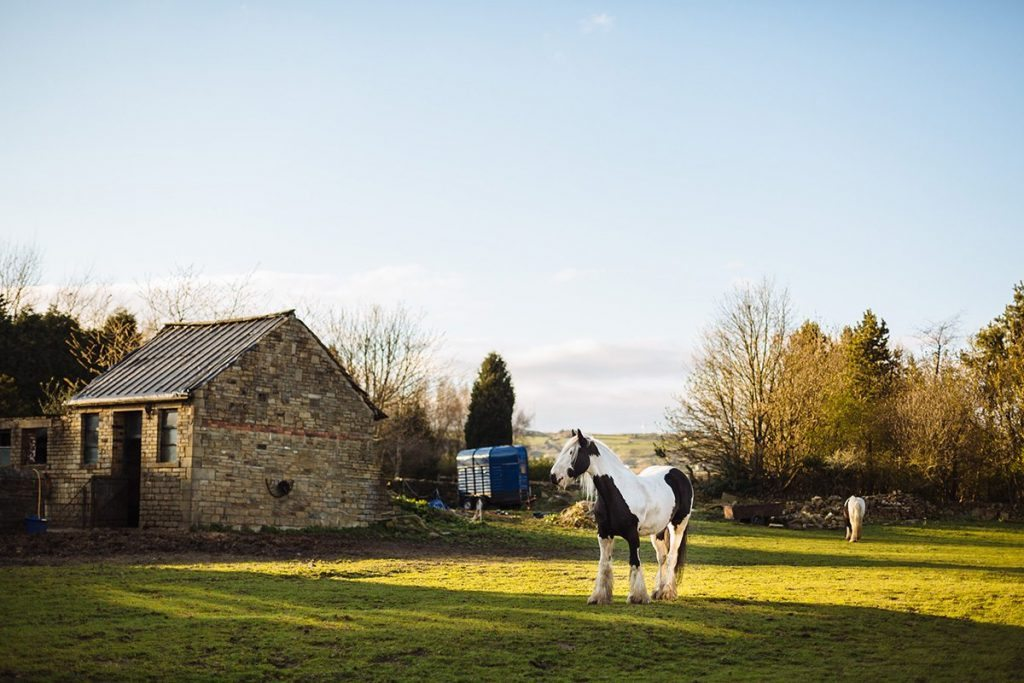 Horse paddock Holdsworth House