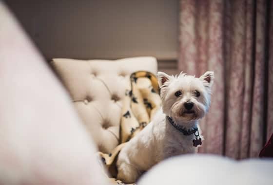 dog friendly hotel in halifax