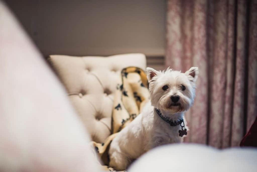 friendly dog hotel in halifax