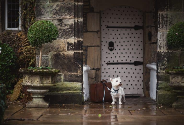 Holdsworth-House-dogfriendly- hotel Yorkshire Archie box large